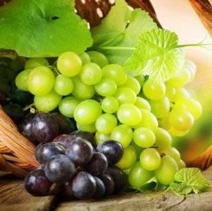 Как правильно пересадить взрослый куст винограда на новое место