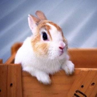 Можно ли давать кроликам соль, в каких соотношениях