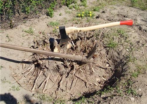 5 причин выкорчевать дерево