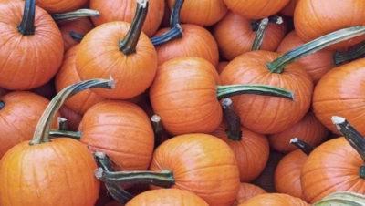 Чем подкормить тыкву в августе, чтобы хорошо хранилась и была сладкая. открытый грунт