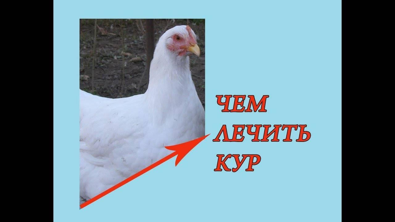 Что делать если у курицы большой зоб