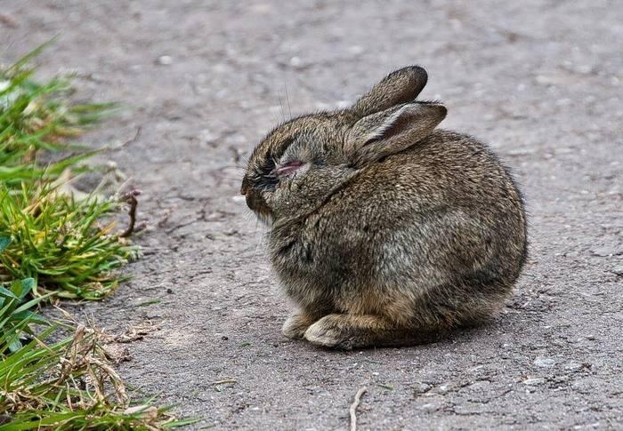 Почему кролик ничего не ест и не пьет. кролик ничего не ест?что делать? декоративный кролик ничего не ест и лежит