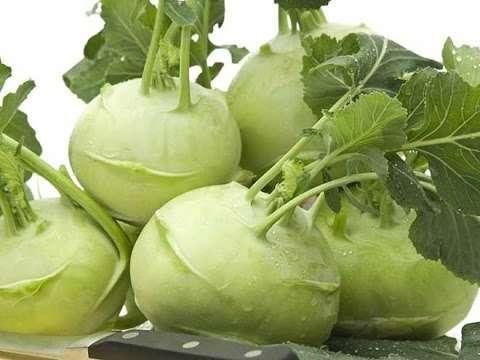Капуста кольраби - описание, ценность, сорта, посадка и выращивание | россельхоз.рф