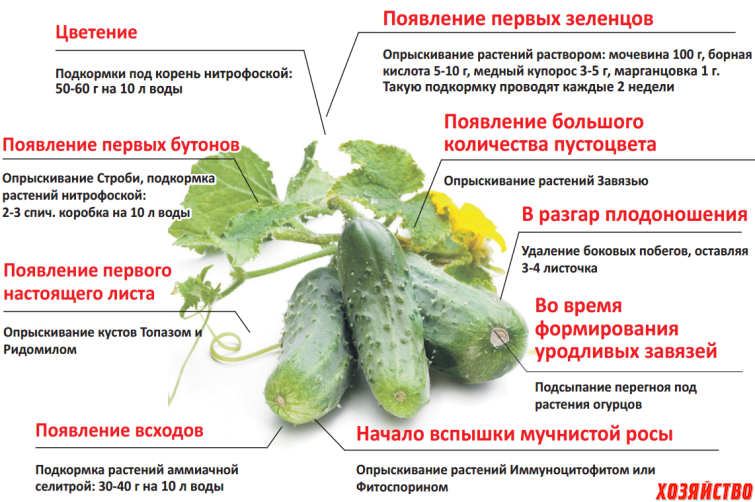 Уход за огурцами в открытом грунте: как правильно посадить, часто ли нужно поливать?