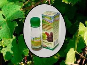 Фунгициды для винограда: применение системных и контактных препаратов для обработки и лечения