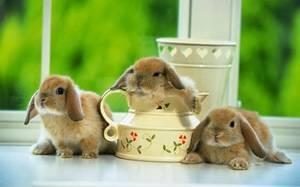 Сколько живут кролики обычные