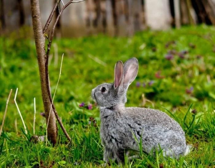 Кролики грызут клетку? причину расскажем, решение есть!