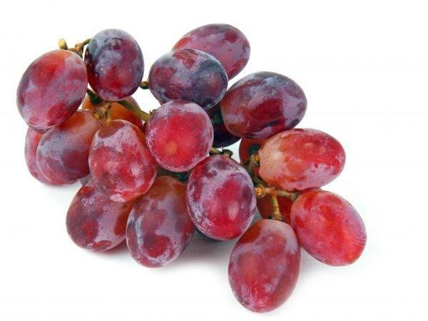 Виноград гелиос: новый, перспективный и высокоурожайный сорт 2015 года