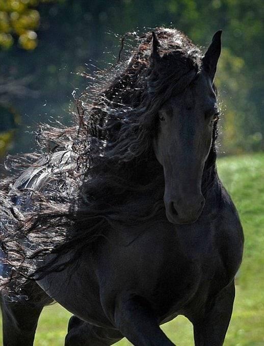 Гнедая лошадь (36 фото): какая это масть? обзор светло- и темно-гнедой, гнедо-пегой, гнедо-чалой и других разновидностей, их характеристика и содержание