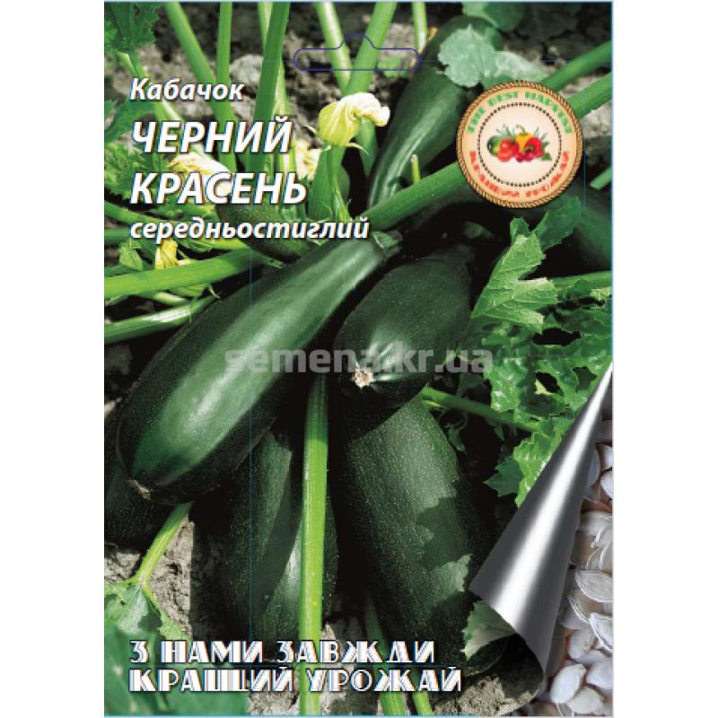 Кабачки: выращивание и уход в открытом грунте