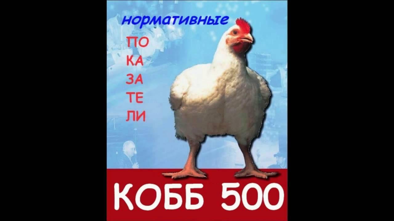 Результаты исследований, динамика живой массы и сохранность цыплят-бройлеров за период выращивания - влияние комплексоната титана на некоторые биохимические показатели и продуктивность цыплят-бройлеров
