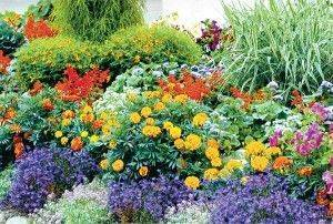 Как создать сад непрерывного цветения