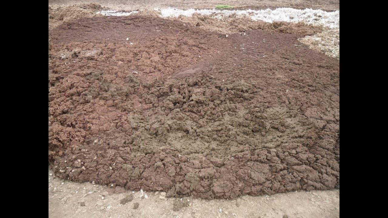 Какие удобрения нужны для огурцов? удобрения для огурцов в открытом грунте и в теплице. калийные, азотные, минеральные удобрения для огурцов