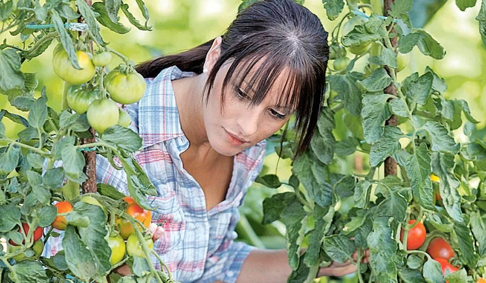 Как понять, что рассада томатов больна фузариозом и каким образом побороть инфекцию?