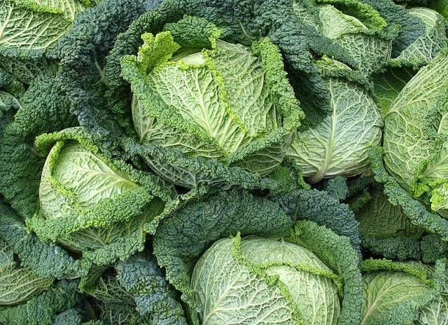 Савойская капуста - сорта, посадка, выращивание