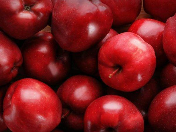 Сорт колоновидной яблони арбат: фото с описанием