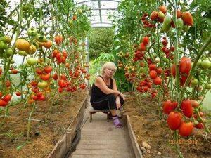 Правильное выращивание и уход за томатами в теплице: пошаговая инструкция для начинающих
