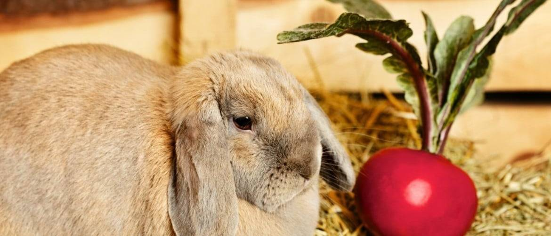 Можно ли давать кролику свежий огурец, листья и ботву: в каком количестве и виде