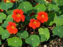 Полезные лекарственные растения: фото, названия и описание, какие есть многолетние лекарственные травы