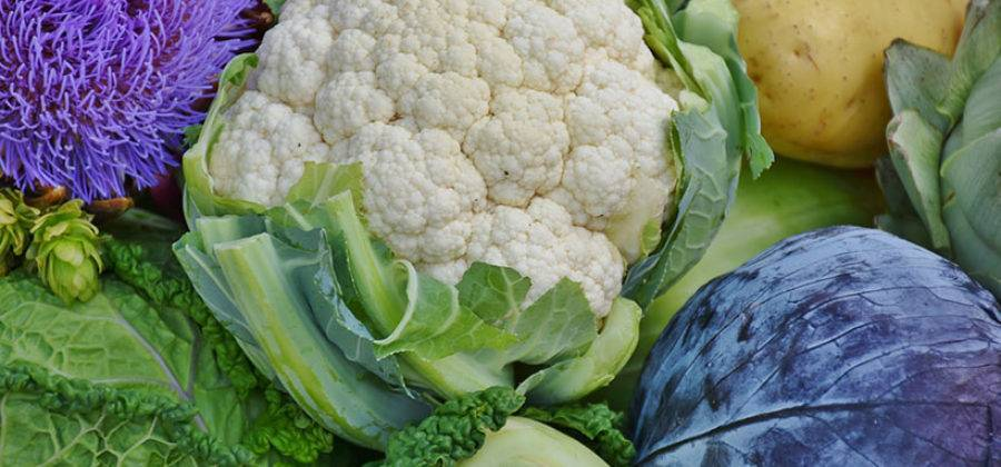 Капуста: посадка и уход в открытом грунте, выращивание, болезни и вредители