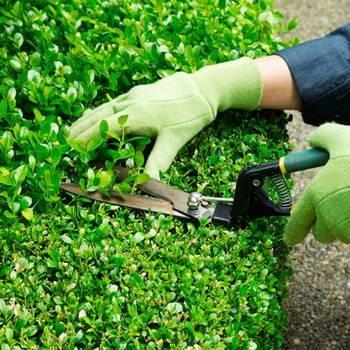 7 способов, как обрезать ветку дерева или куста