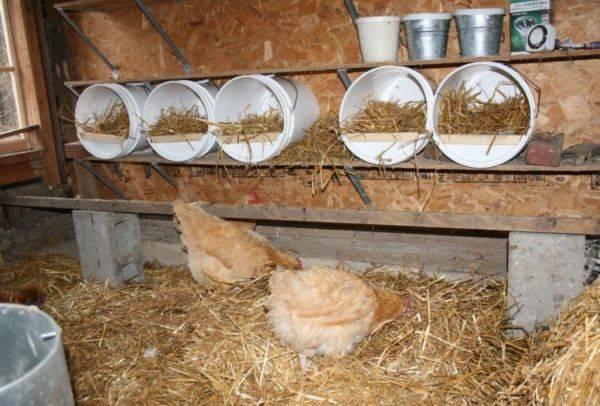 Как сделать гнездо для кур-несушек
