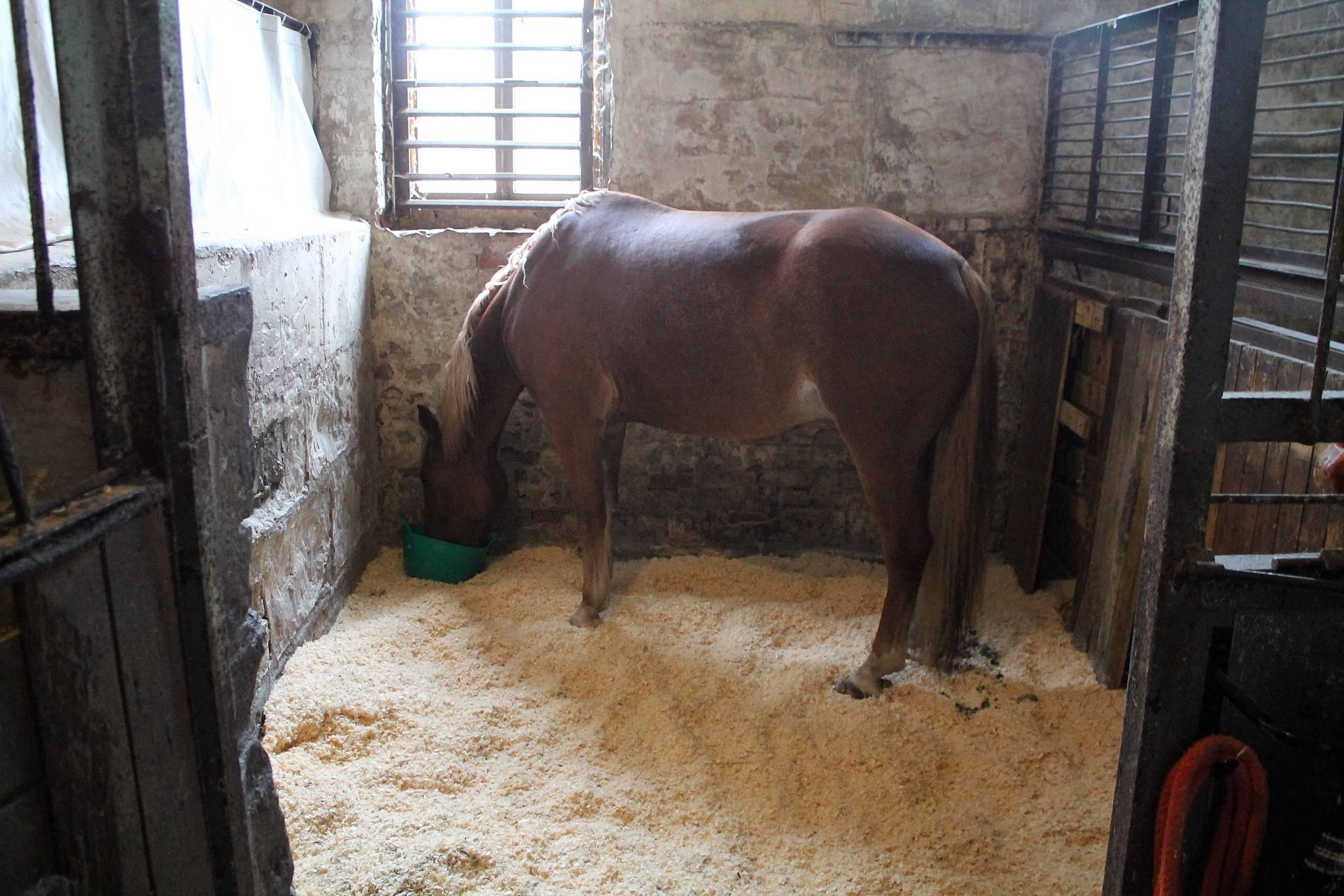 Действительно ли нужна шампунь для лошадей и без чего еще не обойтись, если вы хотите иметь ухоженную и здоровую лошадь