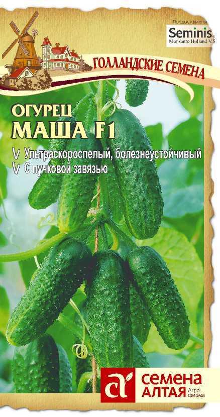 Огурец маша f1: описание, характеристика, выращивание, отзывы