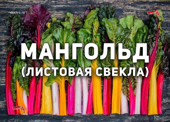 Листовая свекла и другие «сорта-бестселлеры» на территории российской федерации