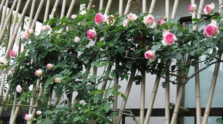 Как сделать опоры для плетистых роз: 3 самых надежных и популярных варианта