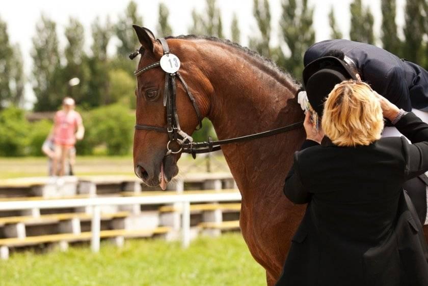 Первые уроки обучения катанию на лошадях