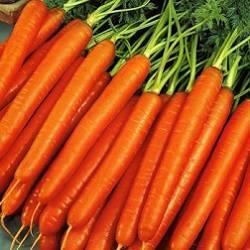 Описание и характеристика сорта моркови нантская 4 - общая информация - 2020