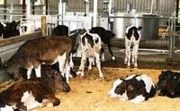 Лечение коров: основные болезни коров, их симптомы, описание и методы лечения. важные аспекты при постановке диагноза и профилактика заболеваний (100 фото)