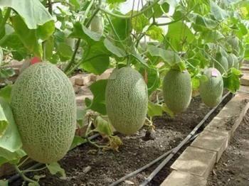 Чем подкормить рассаду для хорошего роста – лучшие народные средства