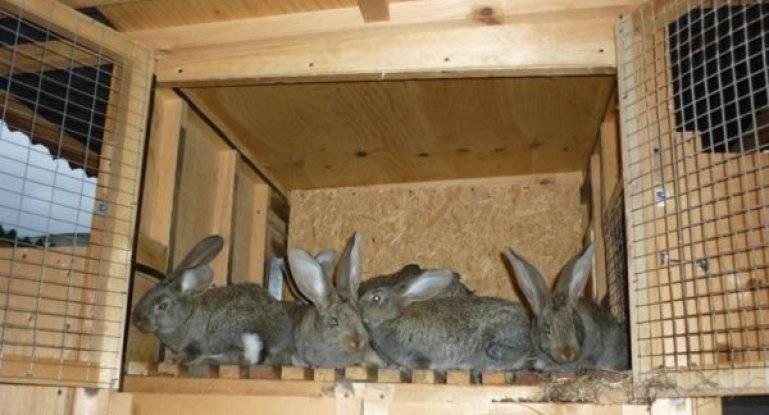 Клетки для кроликов в 2 или 3 яруса своими руками — рассматриваем в общих чертах