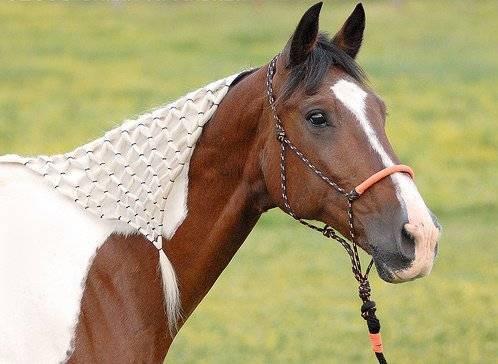 Хвост (лошадь) - tail (horse) - qwe.wiki