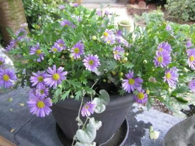 22 растения, которые можно вырастить из косточки на подоконнике и в саду