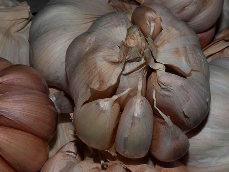 Всё ли мы знаем о чесноке? интересные факты о пряном овоще