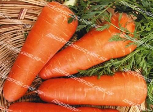 Описание и фото морковки шантане