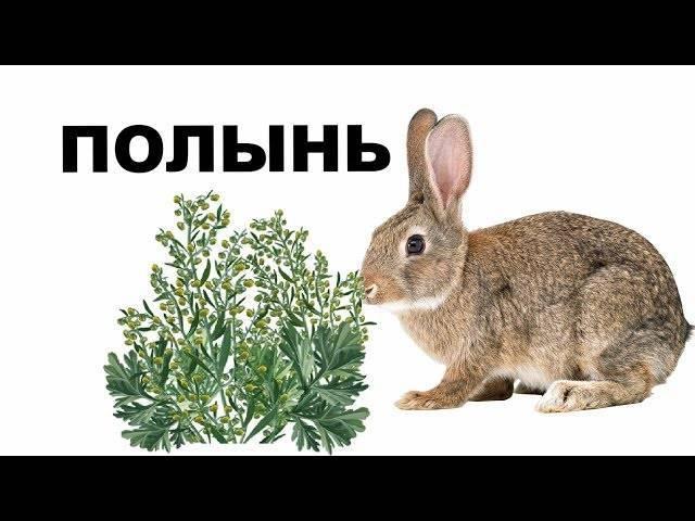 Тимпанол для кроликов дозировка
