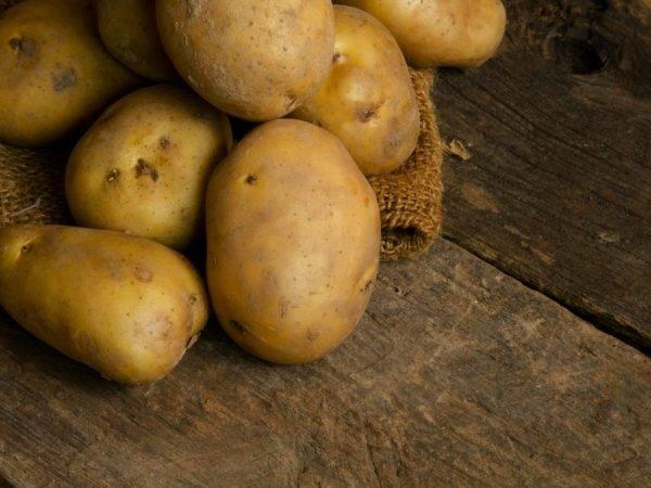 Картофель василек: описание сорта, характеристика, фото