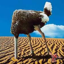 Страус прячет голову в песок: миф или правда