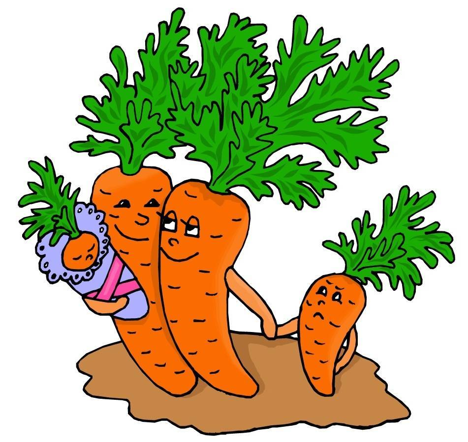 Посадка моркови весной в открытый грунт: как правильно посадить морковь семенами в открытый грунт