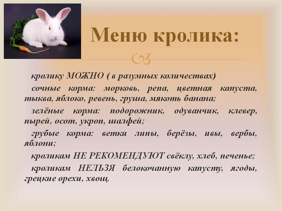 Каким зерном кормить кроликов?