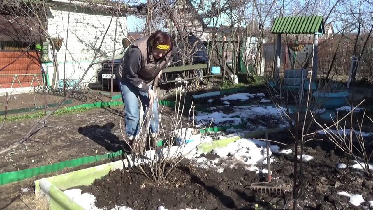 Чем подкормить смородину и крыжовник весной - самые лучшие варианты удобрений