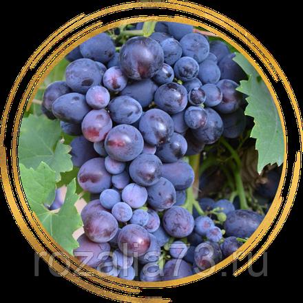 Дорогой гость на праздничном столе — виноград «кардинал»