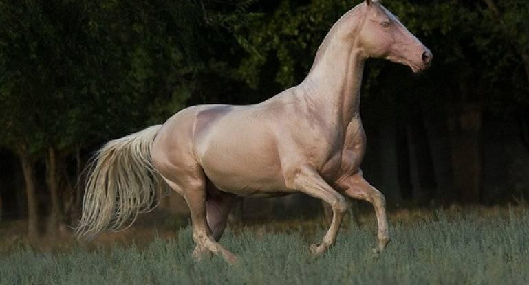 Масть лошади