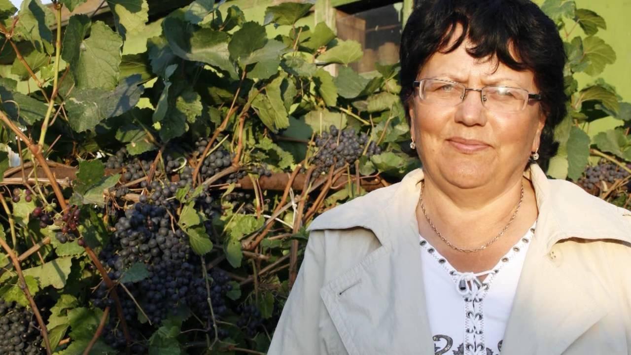 Правильная посадка саженца винограда осенью: когда и как лучше сажать