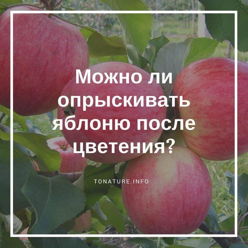 Чем обработать яблони от вредителей летом – инструкция по борьбе с вредителями