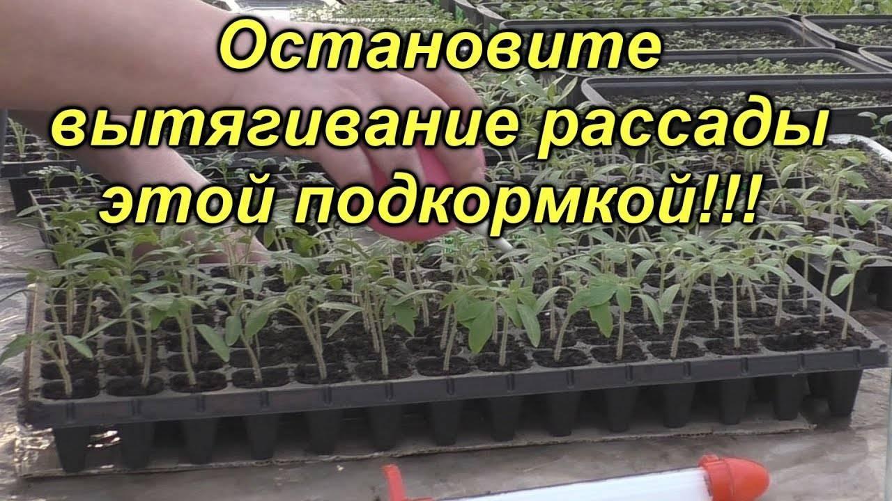 Чем подкормить помидоры после посадки